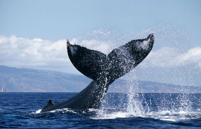 Message D Amour Provenant De Nos Soeurs Baleines Tout